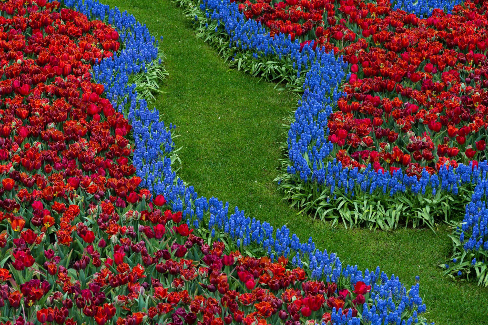 keukenhof couleurs tulipes parc floral moulins