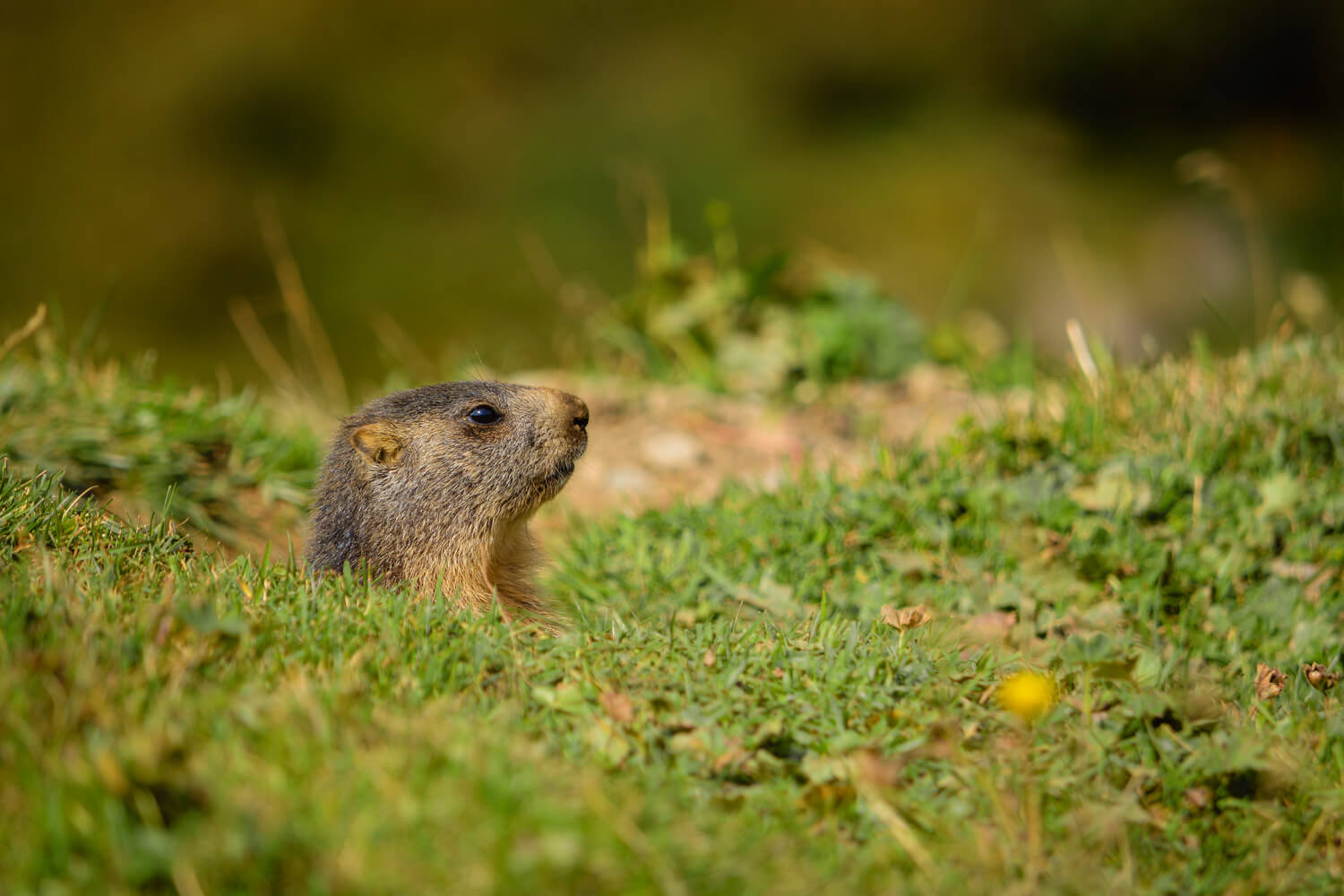 balade marche vallee chapieux marmottes alpage idee week-end