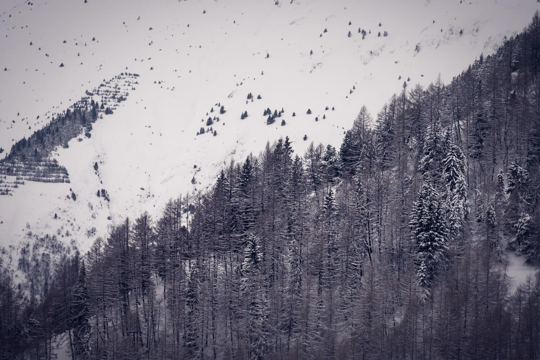 montagne sapin neige alpe huez ski hiver